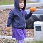 pumpkin008